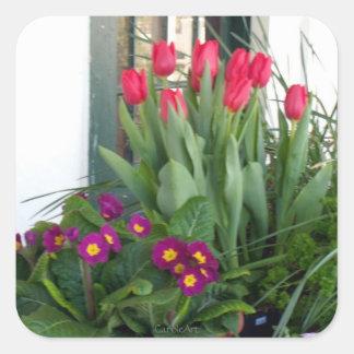 紫色のサクラソウの赤のチューリップ スクエアシール