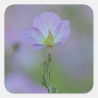 紫色のサクラソウ スクエアシール