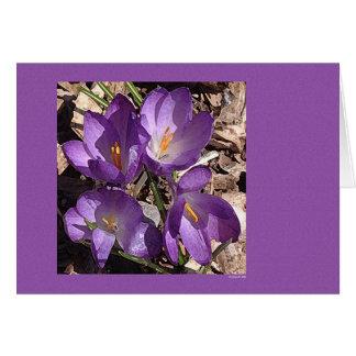 紫色のソファーの花 カード