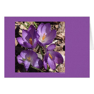 紫色のソファーの花 グリーティングカード