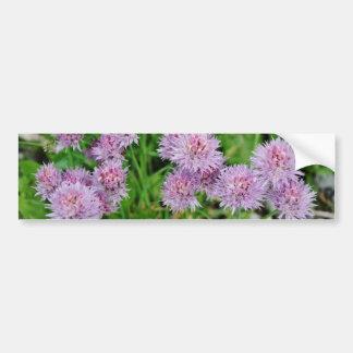 紫色のダリアの花成長する バンパーステッカー