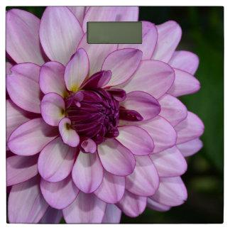 紫色のダリアの花 体重計