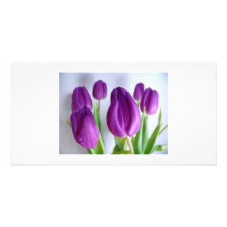 紫色のチューリップの写真カード カード