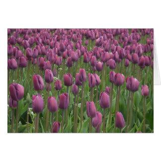 紫色のチューリップ カード
