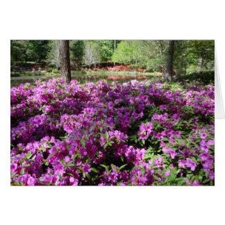 紫色のツツジの花 カード