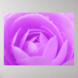 紫色のツバキのプリント ポスター