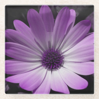 紫色のデイジーの花ガラスのコースター ガラスコースター