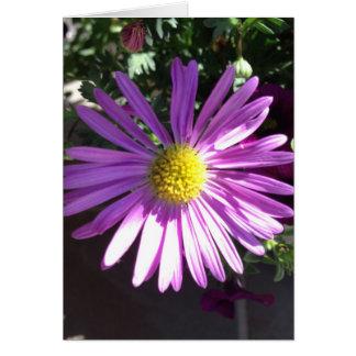 紫色のデイジー カード