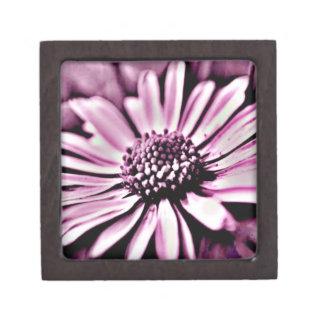 紫色のデイジー ギフトボックス
