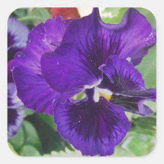 紫色のパンジー スクエアシール