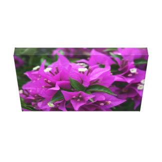 紫色のブーゲンビリア キャンバスプリント