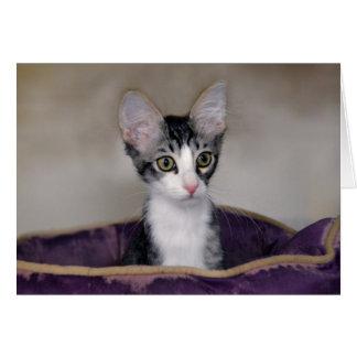 紫色のベッドの虎猫の子ネコ カード