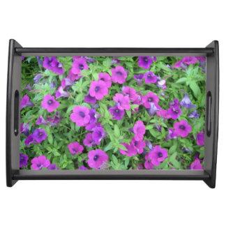 紫色のペチュニアのトレイ トレー