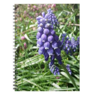 紫色のムスカリの花のMuscari ノートブック