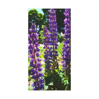 紫色のルピナス属 キャンバスプリント