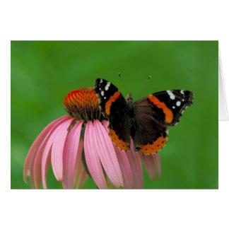 紫色の円錐形の花のアカタテハチョウ蝶 カード