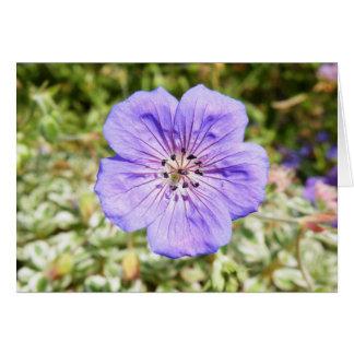 紫色の希望 カード