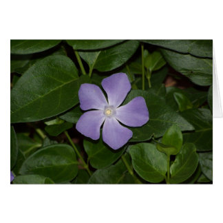 紫色の星 カード