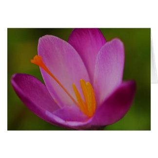 紫色の栄光 カード