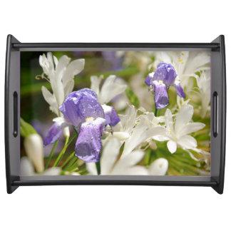 紫色の白い至福 トレー