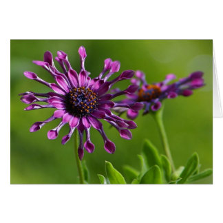 紫色の花のメッセージカード ノートカード