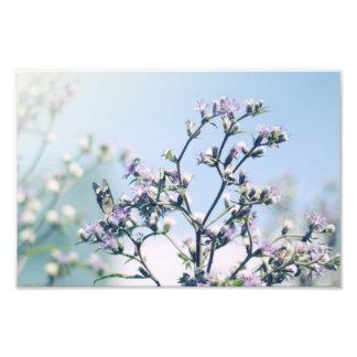 紫色の花の枝の蝶 フォトプリント
