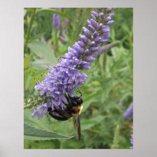 紫色の花の蜂蜜の蜂 ポスター