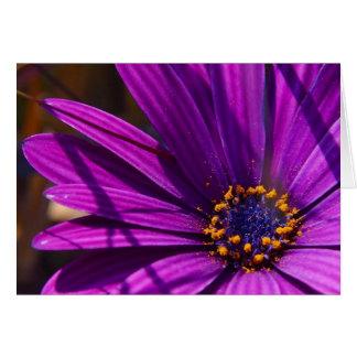 紫色の花びら カード