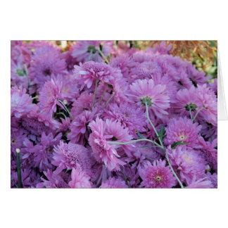 紫色の菊 カード