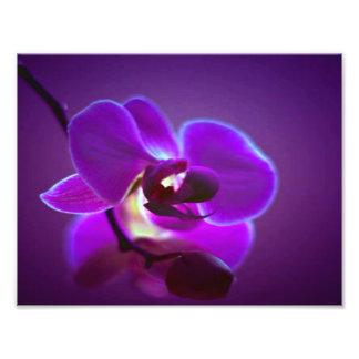紫色の蘭 フォトプリント