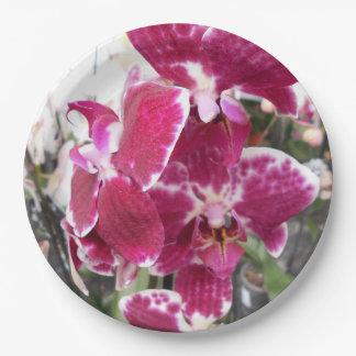 紫色の蘭 ペーパープレート