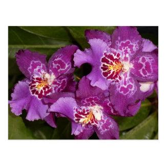 紫色の蘭 ポストカード