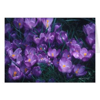 紫色の霞 ノートカード