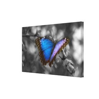 紫色の青い蝶 キャンバスプリント