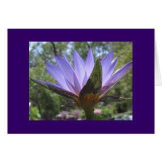 紫色の《植物》スイレン カード
