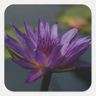 紫色の《植物》スイレン スクエアシール