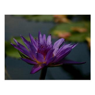 紫色の《植物》スイレン ポストカード