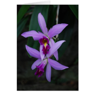 紫色のcattleyaの蘭 ノートカード