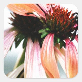 紫色のConeflowerおよび蜂 スクエアシール