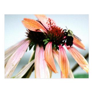 紫色のConeflowerおよび蜂 ポストカード