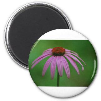 紫色のConeflower マグネット