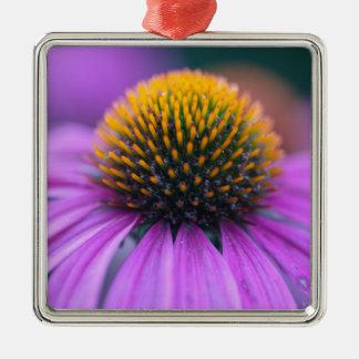 紫色のconeflower (Echinaceaのpurpurea) メタルオーナメント
