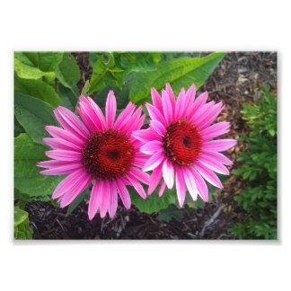 紫色のConeflowers フォトプリント