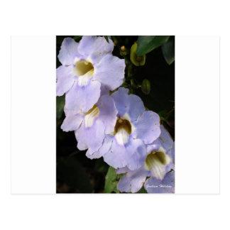 紫色のFlower.jpg ポストカード