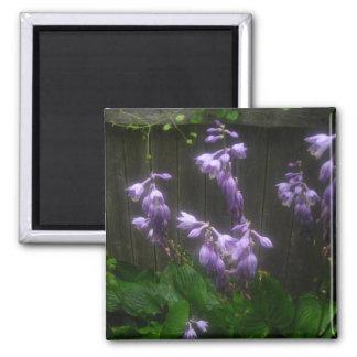 紫色のHOSTAの鐘 マグネット