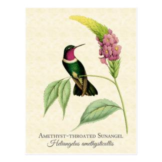 紫色のThroatedハチドリの芸術 ポストカード