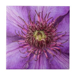 紫色クレマチスの花 タイル