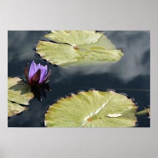 紫色ユリ ポスター
