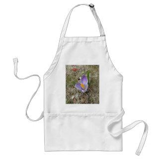 紫色及び白いクロッカスの開花 スタンダードエプロン