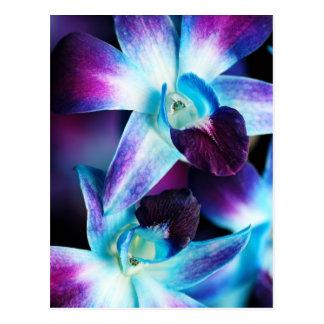 紫色及び青のデンドロビウムの蘭によってカスタマイズ蘭 ポストカード